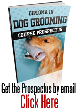 Dog Grooming course brochure